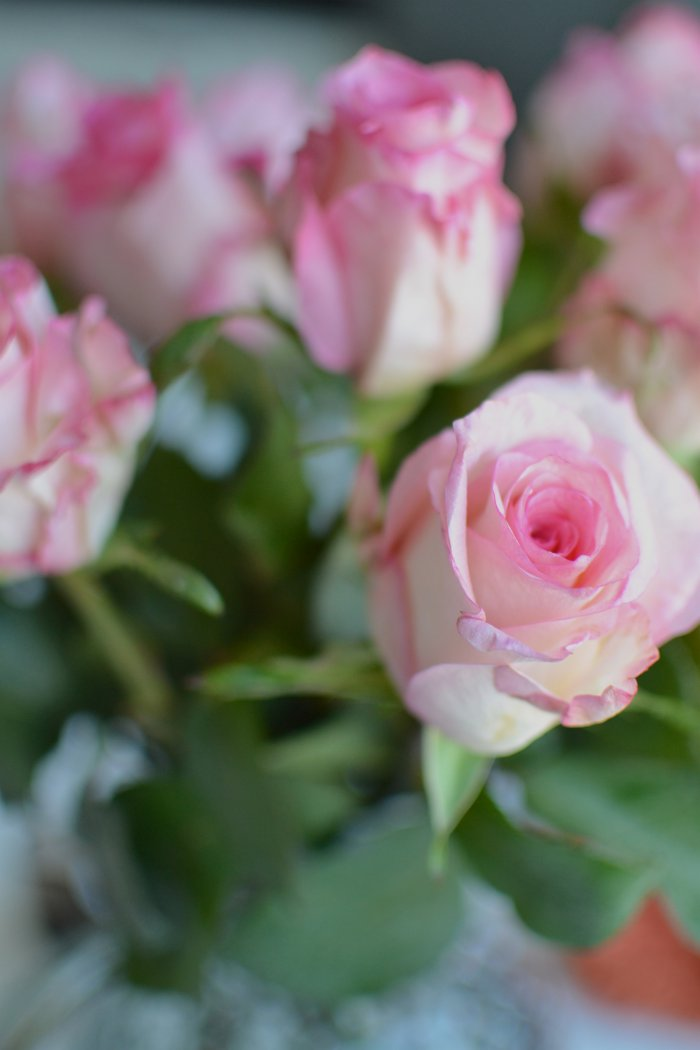 rosa, ros, rosa ros, fibromyalgi, fru fibro
