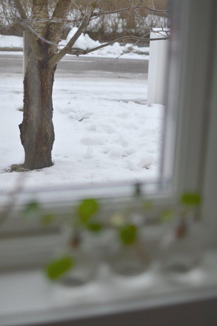 snöslask, frufibro