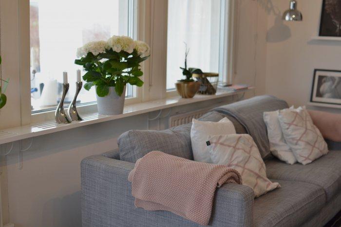 Nystädat vardagsrum med vackraste hortensian i fönstret. Efter en dag med städ och fix tillsammans med svärmor tog väderväxlingar och ansträngning ut sin rätt och det blev sängläge till eftermiddagen, vardagen med fibromyalgi