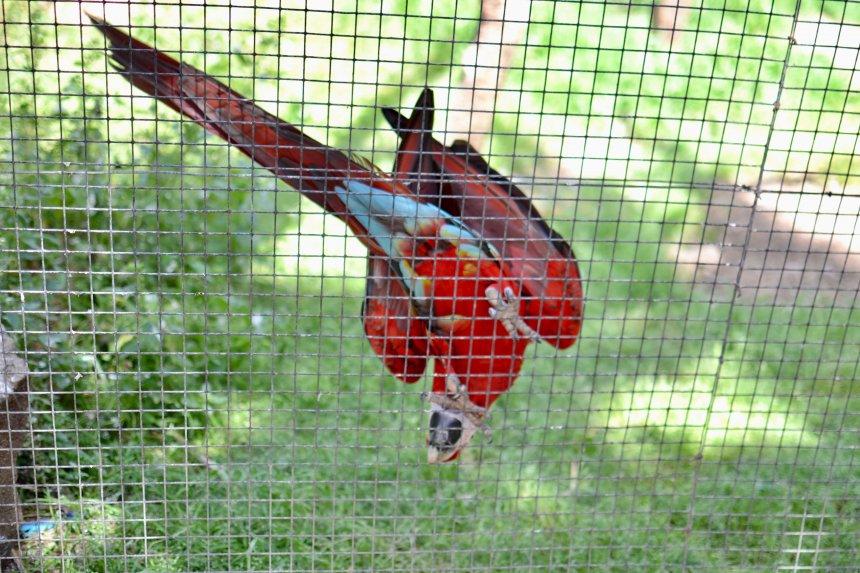 Lagos Zoo, papegoja upp och ned