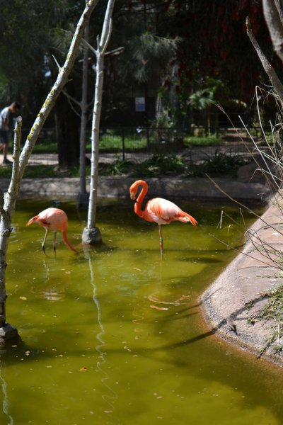 Lagos Zoo Flamingo