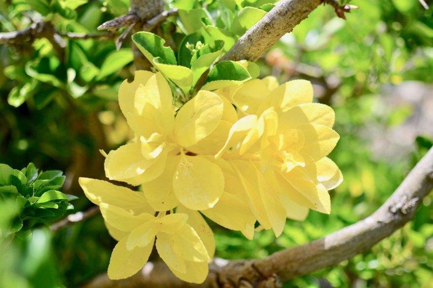 Zoo Marine gula blommor